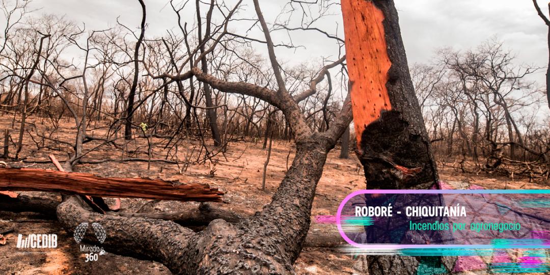 A pesar de la lluvia: las imborrables huellas de los incendios en la Chiquitanía